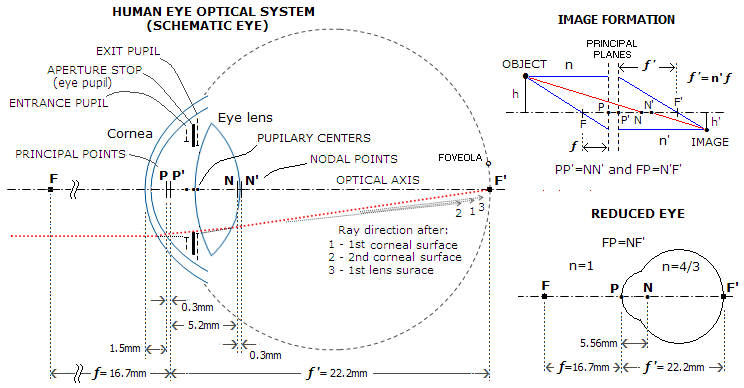 eye_optics2 Ocular Schematic Diagram on